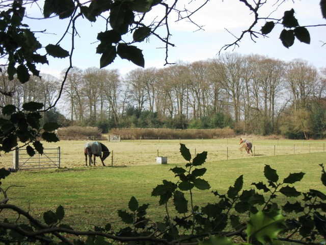 Cholesbury Camp – A Paddock with Horses