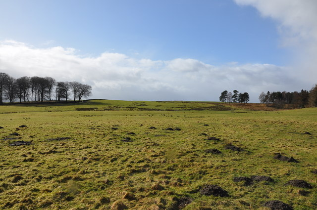 Mixed woodland and open grassy moorland.