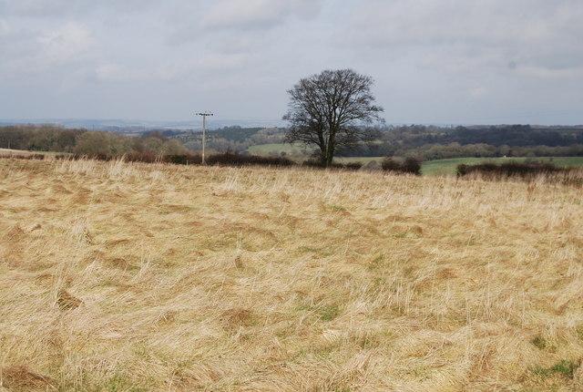 Hay field near Priors Dean