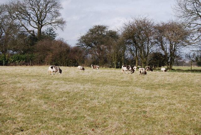 Sheep, Priors Dean