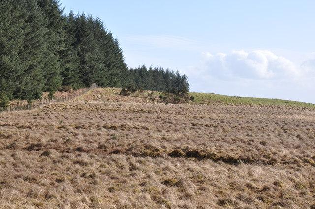Lennieston Muir forestry edge.