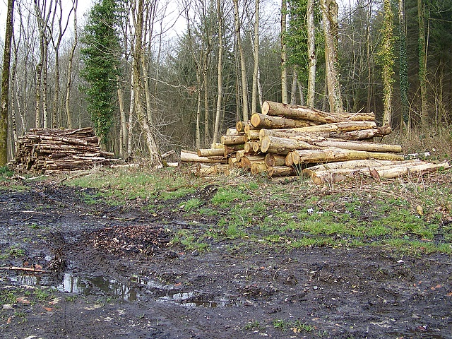 Timber extraction near Newtown