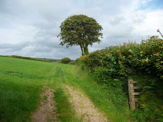 Exmoor : Hedgerows & Countryside