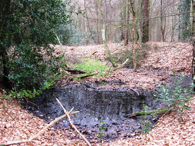 A Woodland Pond in West Wood