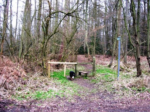 Stile on the Hertfordshire side of Shire Lane, Hastoe