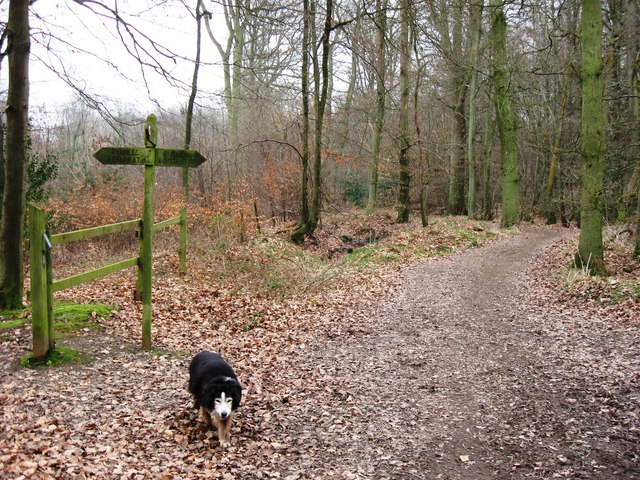 The Bridleway was once much wider