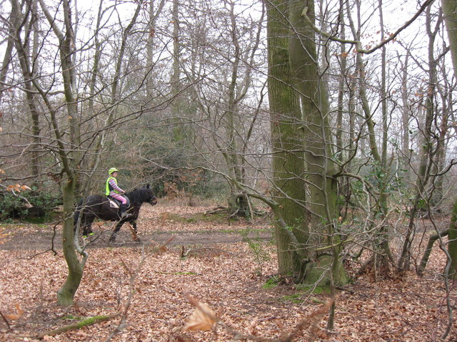 A Horse Rider using the Bridleway