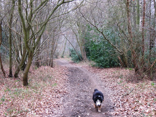 On the Bridleway in Shrubs Wood, Hastoe