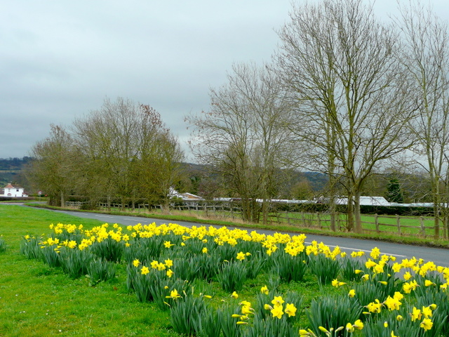 Floral roadside by Badgeworth Lane