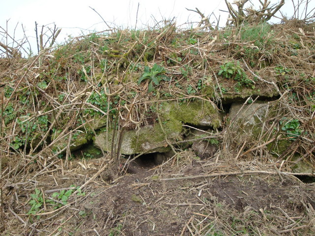 Rabbit holes in a Cornish Hedge