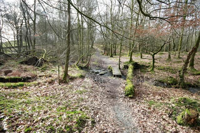 Footpath Through Rather Heath