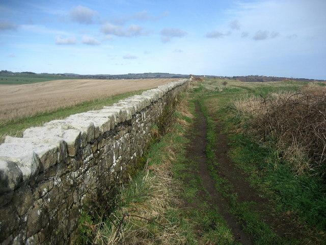 Northumberland Coast Path near Buston Links