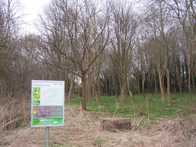 Landscaped woods beside Stonepit Field
