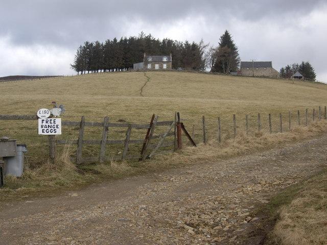 Rinturk farm