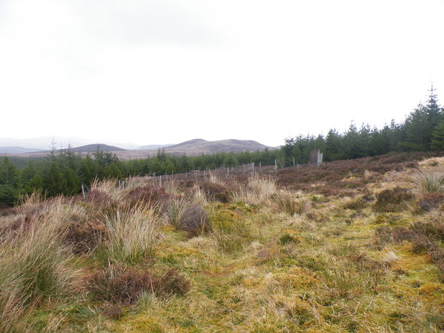 Fenced Area on Leathad nan Toll