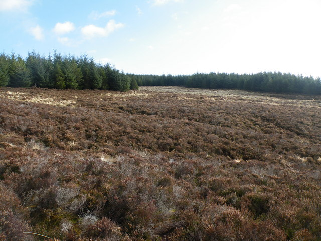 Forest Clearing on Cnoc na Feadaige