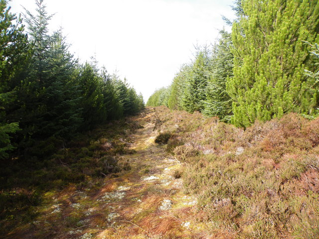 Forest Firebreak coming from Cnoc na Feadaige