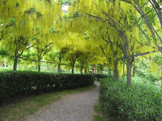 Bodenham Arboretum, Worcestershire