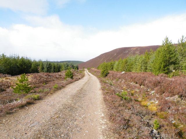 Forest Track passing below Beinn Domhnaill
