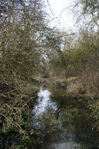 The over grown canal