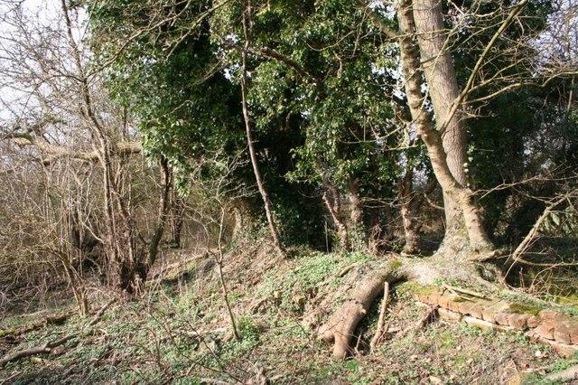 Trees on the lock