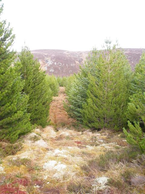 Path through forest breaks to Beinn Domhnaill