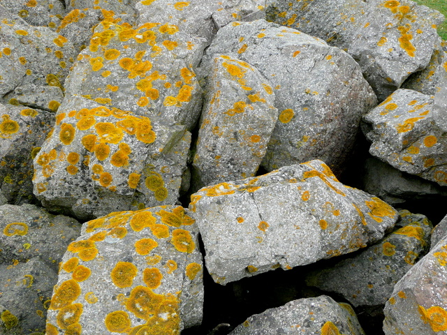 Lichen-covered boulders 1