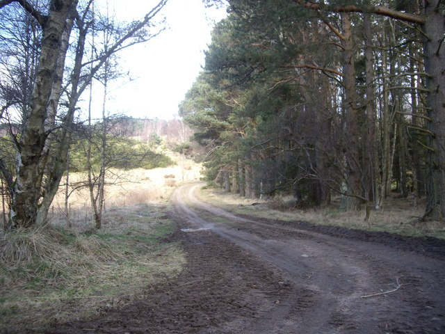 Track by woodland edge in Spring