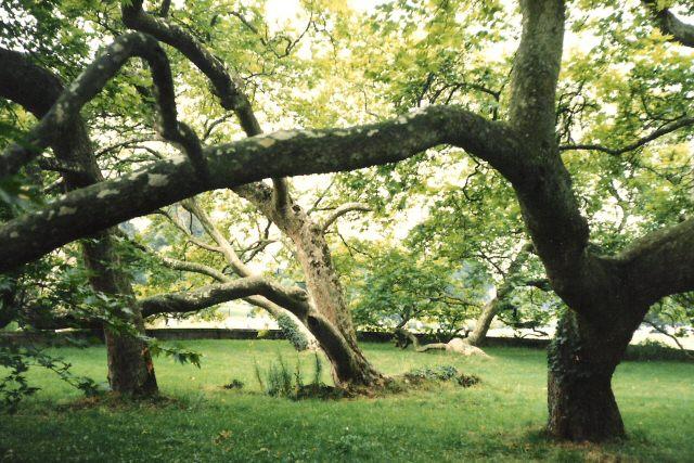 Blickling Hall Trees