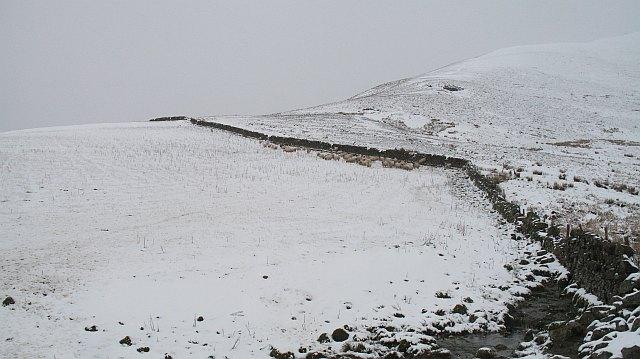 Sheep beneath South Black Hill