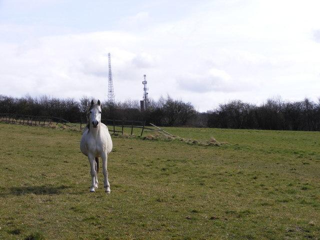 Beacon Masts View
