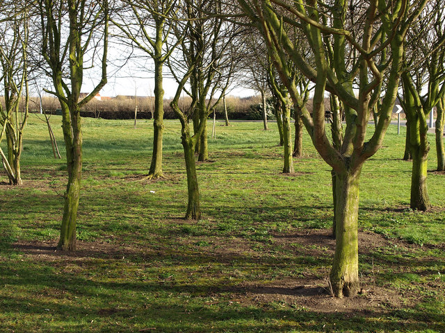 Young Copse