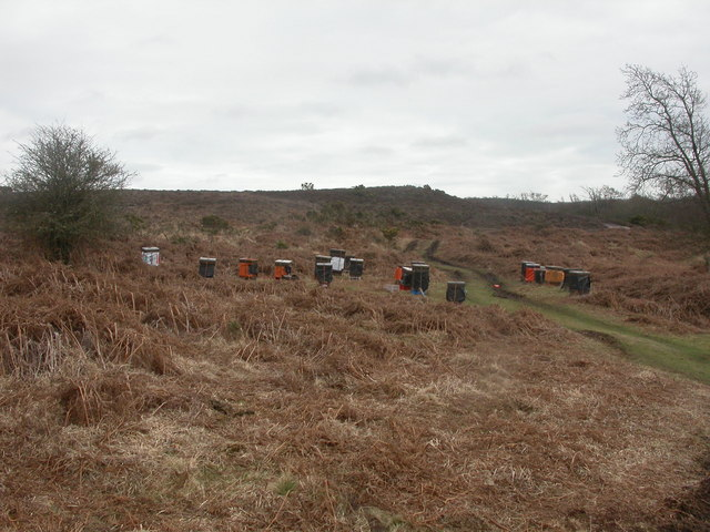 Middlebere Heath, beehives