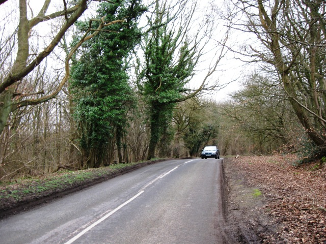 Ivy-covered trees by the Road