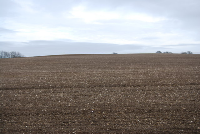 A Bare field near Hawkley Hanger