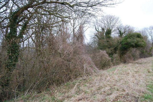 Edge of the woodland, Hawkley Hanger