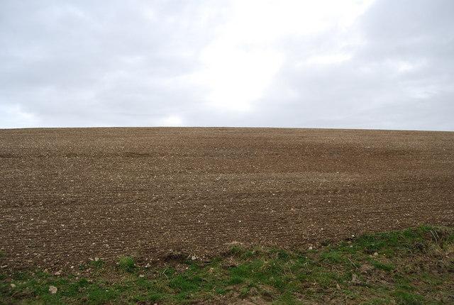 A Bare field near Hawkley Hanger