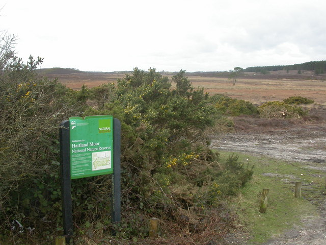 Hartland Moor National Nature Reserve