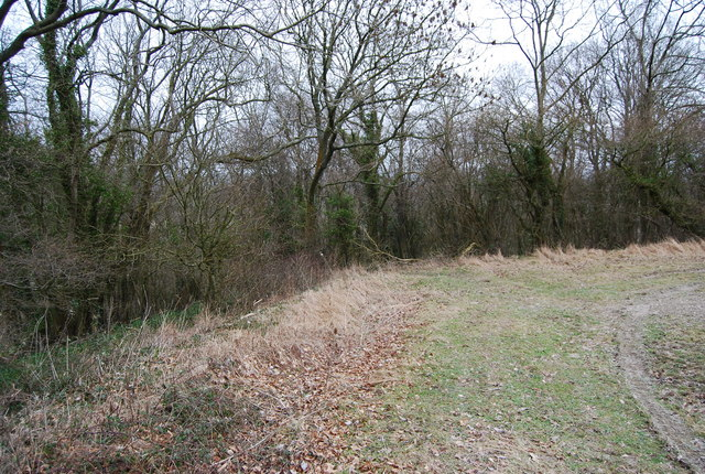 Footpath enters the woods, Hawkley Hanger