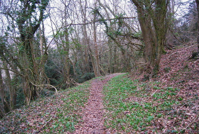 Footpath through the woods, Hawkley Hanger