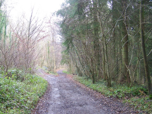 Restricted byway near Stony Hill
