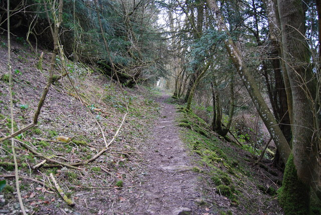 Footpath through the woods, Hawkley Hanger