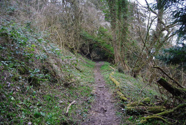 Footpath through the woods, Hawkley Hanger (2)