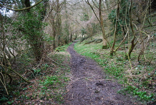 Footpath through the woods, Hawkley Hanger (3)