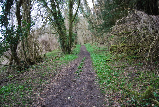 Footpath through the woods, Hawkley Hanger (4)