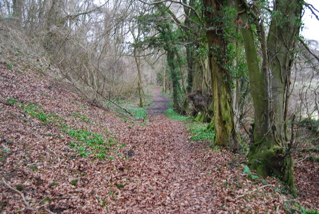 Footpath through the woods, Hawkley Hanger (5)