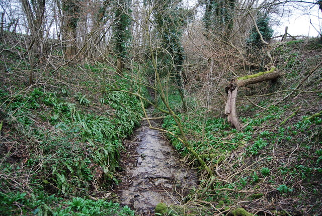 Source of a small stream, Hawkley Hanger