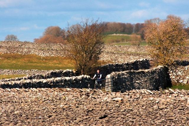 Limestone Walls, Keld Lane