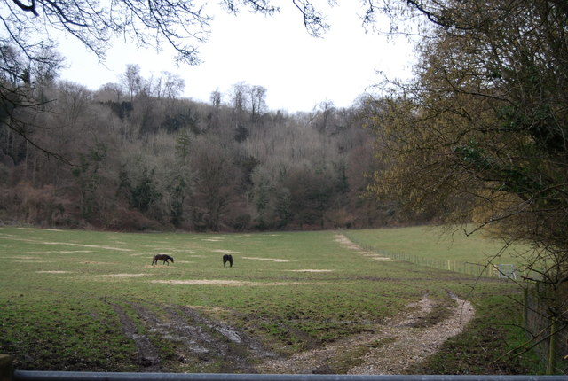 Horses below Noar Hill Hanger