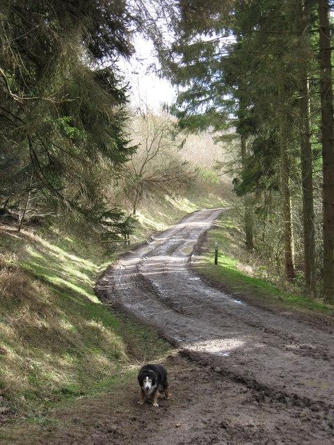 Wendover Woods – Half Way Down – or Half Way Up